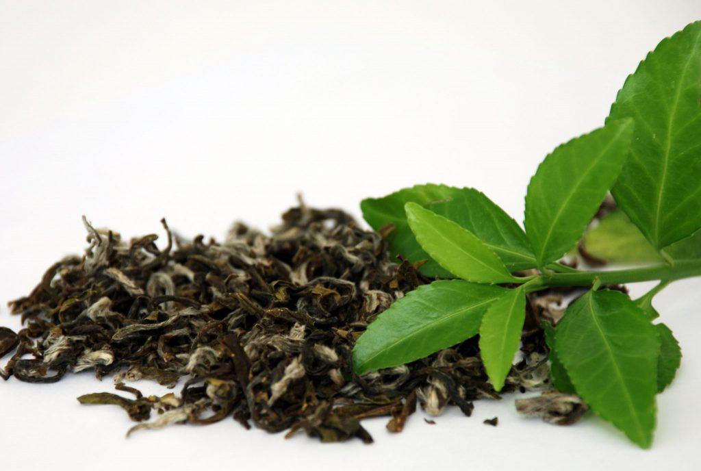 Grønn Te på resept